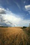 поле Стоковые Изображения
