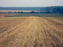 поле Стоковое Фото