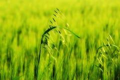 поле Стоковые Фото