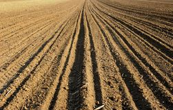 поле стоковое фото rf