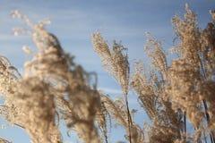 поле Стоковые Фотографии RF