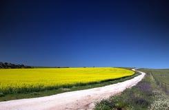 поле canola Стоковая Фотография RF