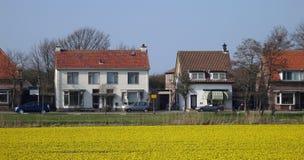 поле daffodils Стоковые Изображения