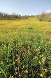 поле kilkis Стоковое Изображение RF