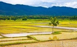 поле thailand2 внутренние районы страны стоковая фотография