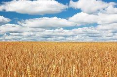 поле wheal Стоковые Фото
