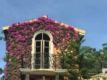 Ползучесть фиолетовой бугинвилии или бумажного цветка на здании Стоковые Изображения