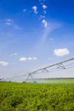 полив поля земледелия Стоковые Изображения RF