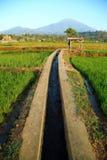 Полив поля риса Стоковые Изображения