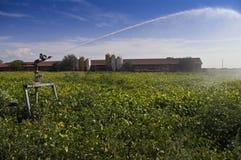 полив поля Стоковое Изображение RF