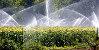 Полив урожая. Стоковые Фотографии RF