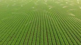 Полив Sprinklers земледелие продовольственных сельскохозяйственных культур поля фермы акции видеоматериалы