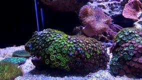 Полипы коралла в сцене танка аквариума рифа Стоковые Фото