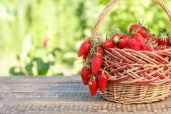 Полная корзина с как раз выбранными свежими красными зрелыми клубниками на древесине Стоковое Фото