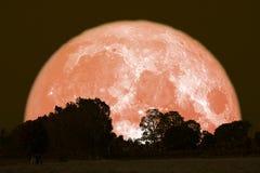 полная луна грома на ночном небе назад над лесом силуэта стоковые фото
