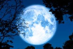 полная луна коркы назад на заводе и деревьях силуэта на ночном небе стоковое фото