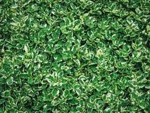 Полная предпосылка природы рамки свежих зеленых листьев Стоковая Фотография RF