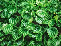 Полная предпосылка природы рамки свежих зеленых растений Стоковые Фотографии RF