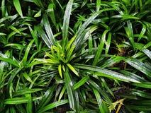 Полная предпосылка рамки зеленых растений после идти дождь Стоковая Фотография