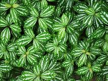Полная предпосылка рамки свежих зеленых листьев Стоковое Фото