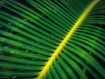 Полная предпосылка рамки свежих зеленых лист ладони Стоковое Фото