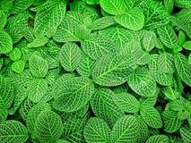 Полная предпосылка рамки свежих зеленых растений Стоковое Изображение