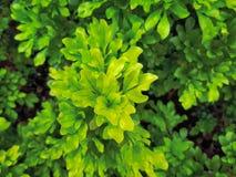 Полная предпосылка рамки свежих зеленых растений Стоковые Изображения RF