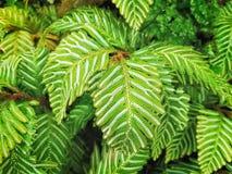 Полная предпосылка рамки уникально зеленых растений лист Стоковая Фотография RF