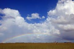 Полная радуга над национальным парком болотистых низменностей, FL стоковая фотография rf
