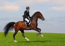 полная скорость gallop Стоковое Изображение