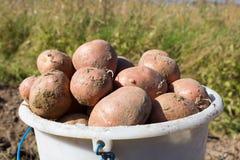 Полное ведро картошек Стоковая Фотография RF