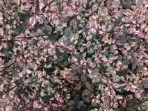 Полное изображение рамки листьев лаванды и зеленого цвета растя на внешней стене Стоковые Фото