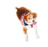 полностью американская собака стоковые фото