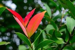 Полностью из новых лист не поворачивает зеленый цвет Стоковые Изображения RF