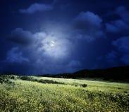 полночь лужка Стоковое Изображение
