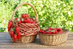 Полные корзины с как раз выбранными свежими красными зрелыми клубниками дальше сватают Стоковые Изображения