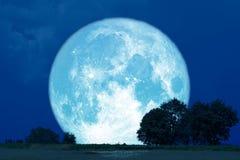 Полные самца оленя луны деревья силуэта назад в поле стоковые изображения