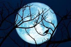 Полный засаживать мозоли лунатирует назад ветвь и птица силуэта сухие на дереве стоковое фото