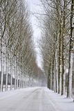 полный снежок дороги Стоковое Фото