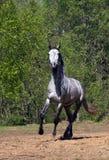 полный ход gallop стоковое изображение