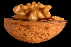 Половина грецкого ореха Стоковое фото RF