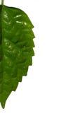 половинные листья Стоковые Фотографии RF