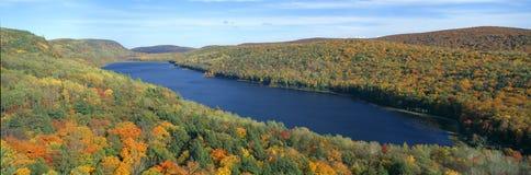 положение дикобраза парка цвета осени Стоковое Изображение