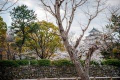 Положение замка Wakayama на холме с вишневыми цветами в foregound стоковое фото