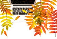 Положение квартиры рабочего места офиса предпосылки листьев осени компьтер-книжки белое Стоковая Фотография