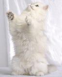 положение котенка Стоковые Изображения RF