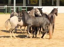 положение лошади Стоковые Фотографии RF