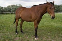положение лошади Стоковые Изображения