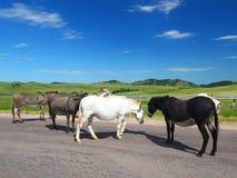 положение парка custer burros Стоковое Изображение RF