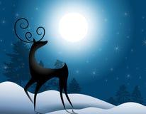 положение северного оленя лунного света Стоковая Фотография RF